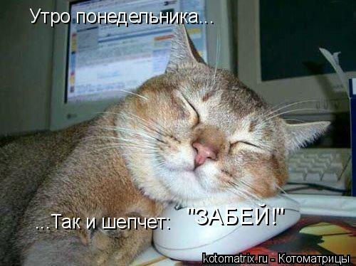 """Котоматрица: Утро понедельника...  ...Так и шепчет:  """"ЗАБЕЙ!"""""""