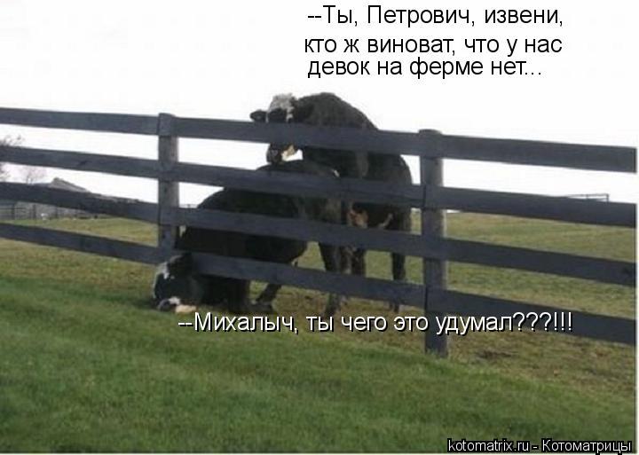 Котоматрица: --Михалыч, ты чего это удумал???!!! --Ты, Петрович, извени,  кто ж виноват, что у нас  девок на ферме нет...