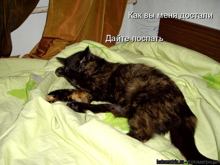 Котоматрица: Как вы меня достали Дайте поспать