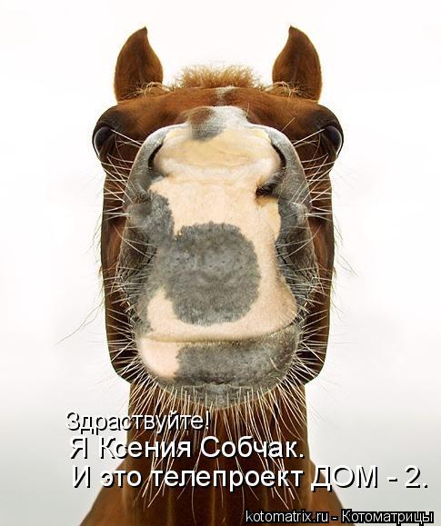 Котоматрица: Здраствуйте! Я Ксения Собчак. И это телепроект ДОМ - 2.