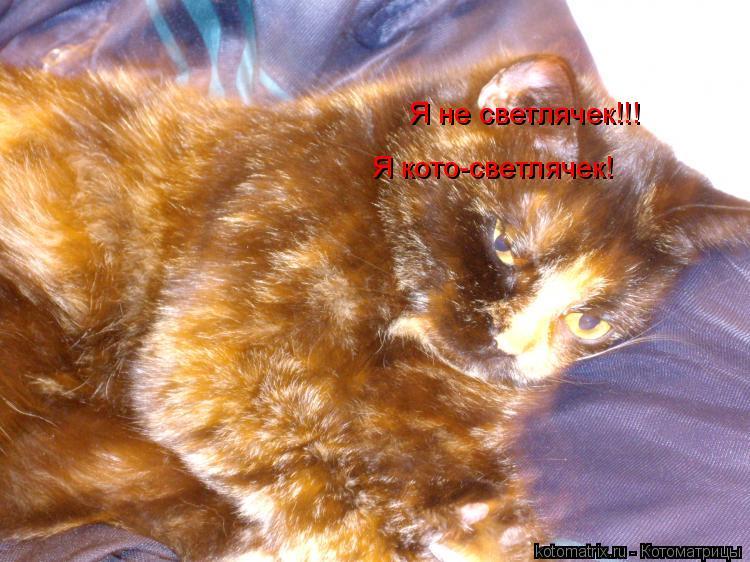 Котоматрица: Я не светлячек!!!  Я кото-светлячек!