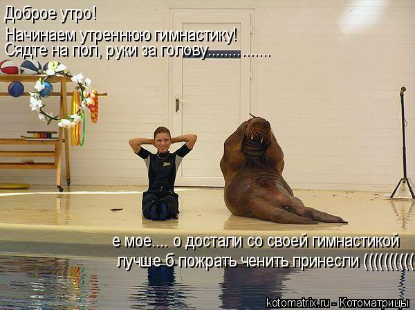 Котоматрица: Доброе утро!  Начинаем утреннюю гимнастику! Сядте на пол, руки за голову............... е мое.... о достали со своей гимнастикой лучше б пожрать чени