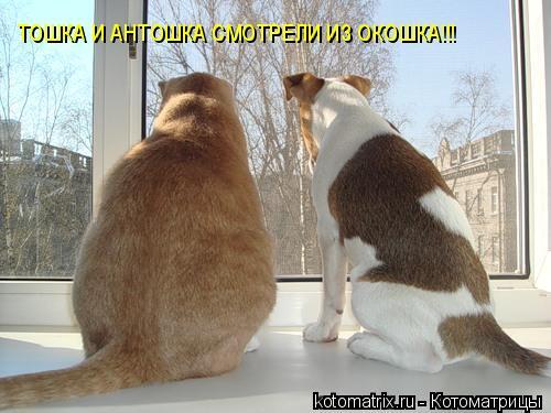 Котоматрица: ТОШКА И АНТОШКА СМОТРЕЛИ ИЗ ОКОШКА!!!