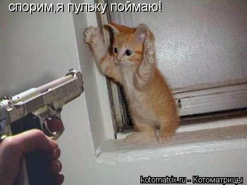 Котоматрица: спорим,я пульку поймаю!