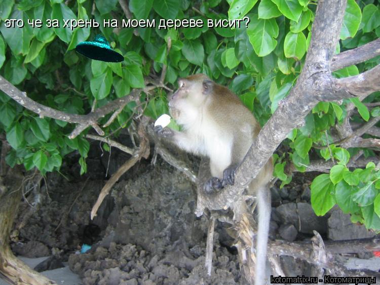 Котоматрица: это че за хрень на моем дереве висит?