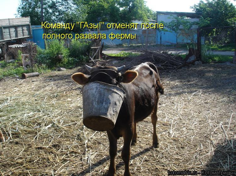 """Котоматрица: Команду """"ГАзы!"""" отменят после полного развала фермы"""