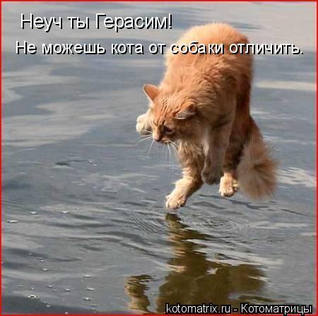 Котоматрица: Неуч ты Герасим! Не можешь кота от собаки отличить.