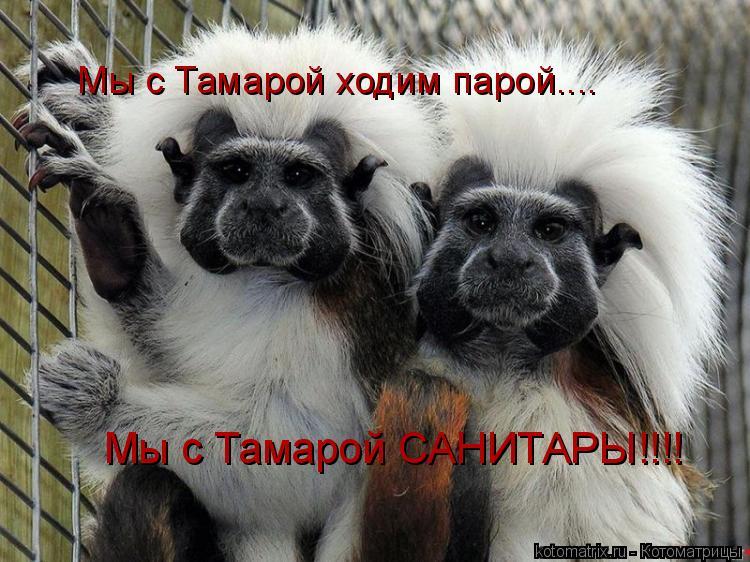 Котоматрица: Мы с Тамарой ходим парой.... Мы с Тамарой САНИТАРЫ!!!!