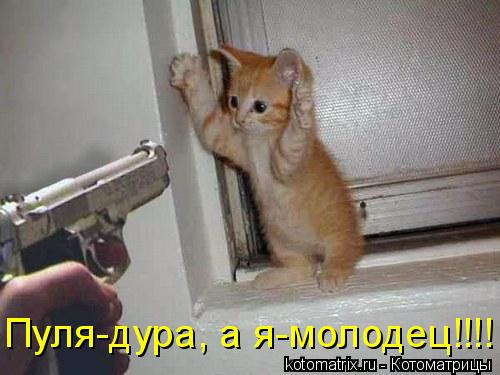 Котоматрица: Пуля-дура, а я-молодец!!!!