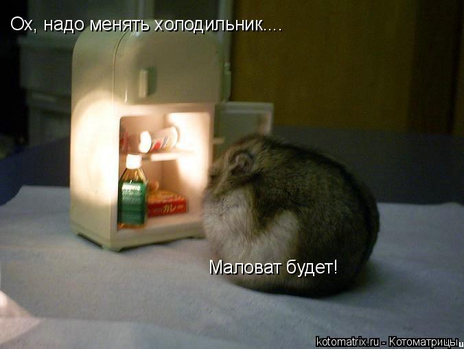 Котоматрица: Ох, надо менять холодильник.... Маловат будет!