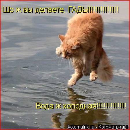 Котоматрица: Шо ж вы делаете, ГАДЫ!!!!!!!!!!!!! Вода ж холодная!!!!!!!!!!!!!
