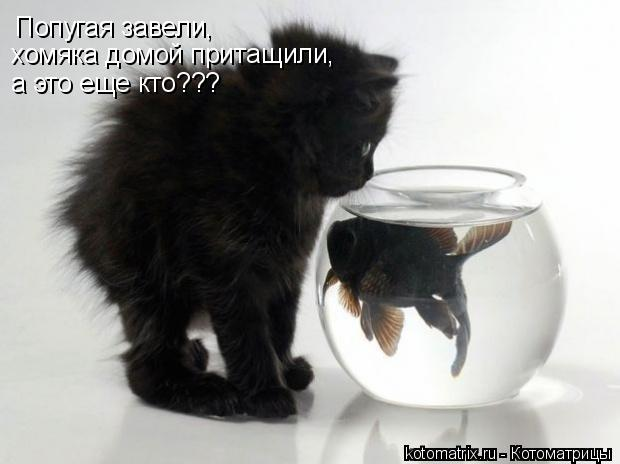 Котоматрица: Попугая завели, хомяка домой притащили, а это еще кто???