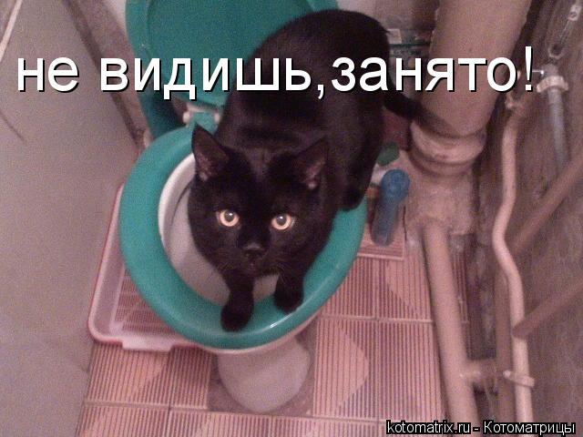 Котоматрица: не видишь,занято!