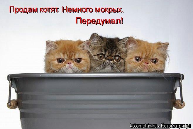 Котоматрица: Продам котят. Немного мокрых. Передумал!