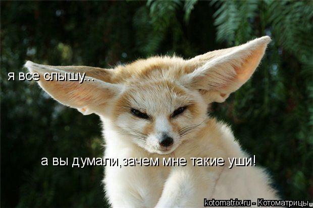 Котоматрица: я все слышу... а вы думали,зачем мне такие уши!