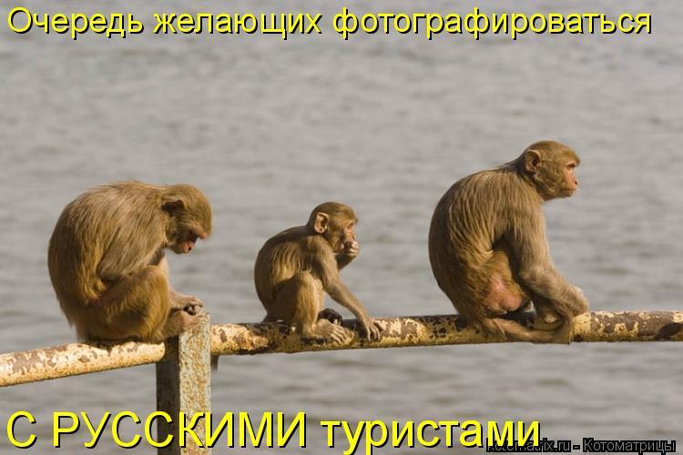 Котоматрица: Очередь желающих фотографироваться  С РУССКИМИ туристами