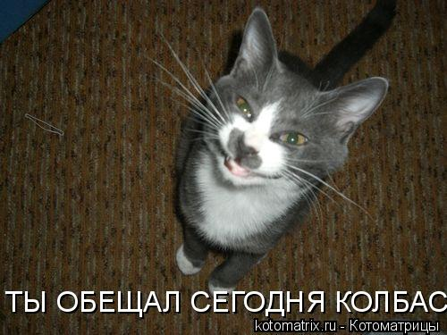 Котоматрица: ТЫ ОБЕЩАЛ СЕГОДНЯ КОЛБАСУ!