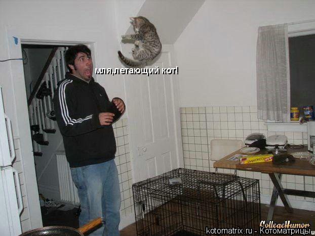 Котоматрица: мля,летающий кот!