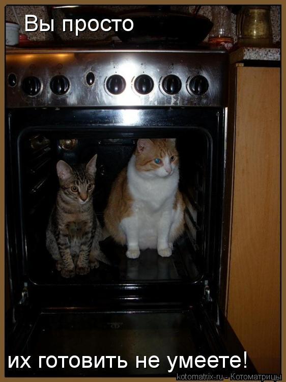 Котоматрица: Вы просто их готовить не умеете!