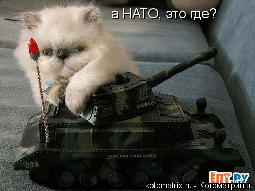 Котоматрица: а НАТО, это где?