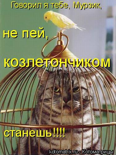 Котоматрица: не пей,  Говорил я тебе, Мурзик, козлетончиком станешь!!!!