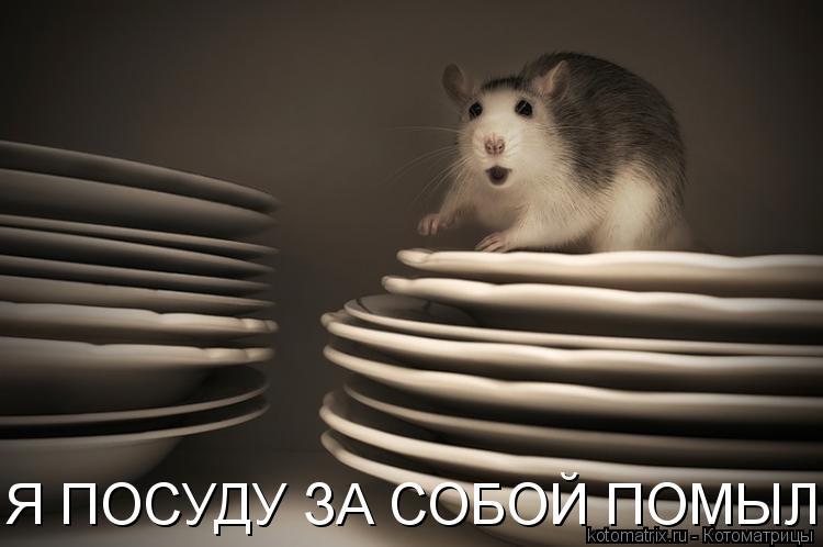 Котоматрица: Я ПОСУДУ ЗА СОБОЙ ПОМЫЛ!!!