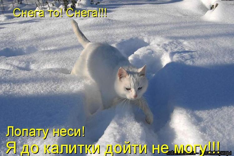 Котоматрица: Снега то! Снега!!!  Я до калитки дойти не могу!!! Лопату неси!