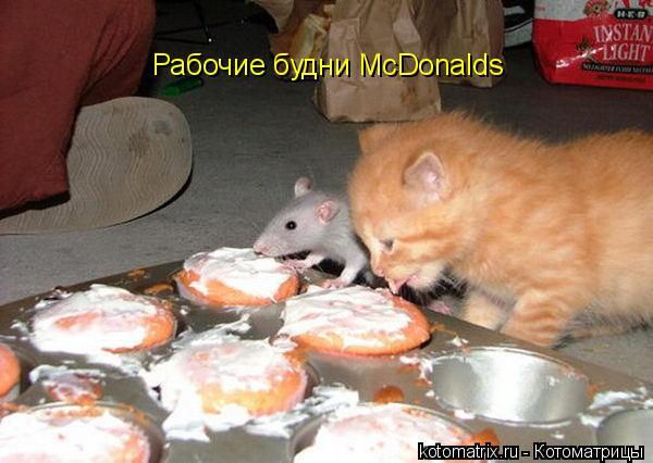 Котоматрица: Рабочие будни McDonalds