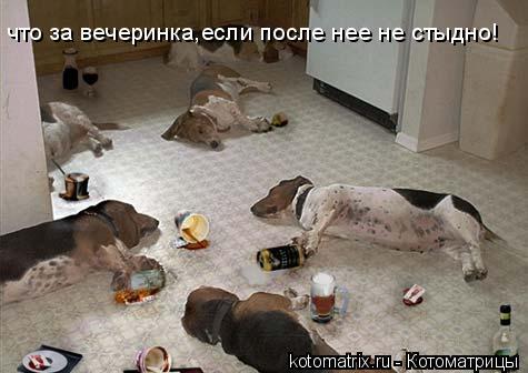 Котоматрица: что за вечеринка,если после нее не стыдно!