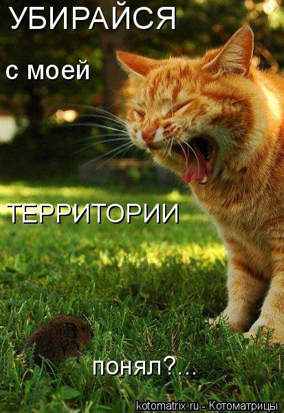Котоматрица: УБИРАЙСЯ  с моей  ТЕРРИТОРИИ понял?...