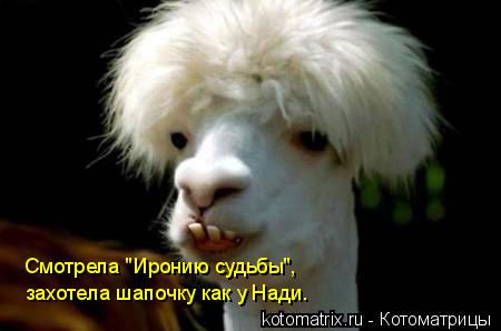 """Котоматрица: Смотрела """"Иронию судьбы"""", захотела шапочку как у Нади."""