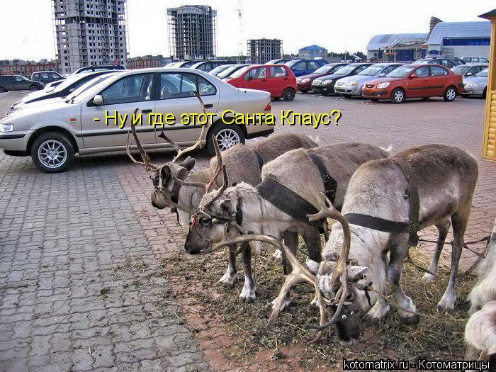 Котоматрица: - Ну и где этот Санта Клаус?