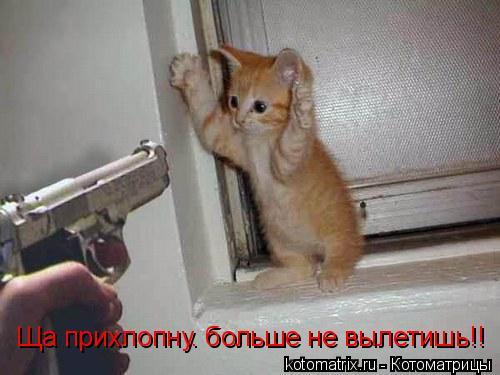 Котоматрица: Ща прихлопну. больше не вылетишь!!