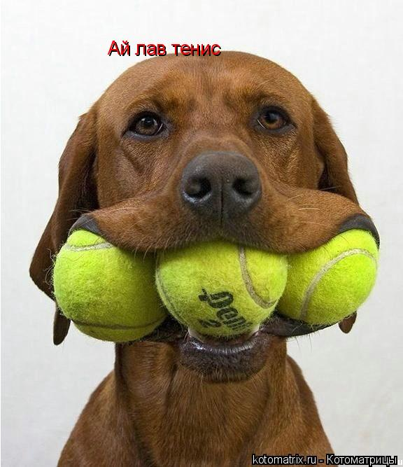 Котоматрица: Ай лав тенис