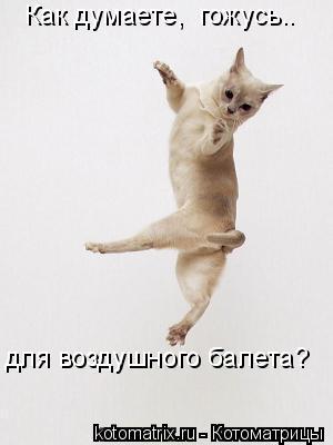 Котоматрица: Как думаете,  гожусь.. для воздушного балета?