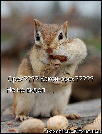 Котоматрица: Орех???? Какой орех????? Не не видел.....