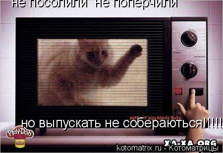 Котоматрица: не посолили  не поперчили но выпускать не собераються!!!!!!!!