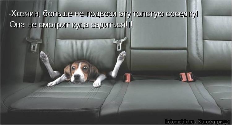 Котоматрица: -Хозяин, больше не подвози эту толстую соседку! Она не смотрит куда садиться!!!