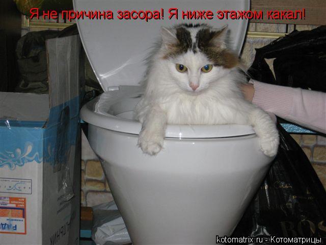 Котоматрица: Я не причина засора! Я ниже этажом какал!