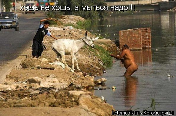 Котоматрица: хошь не хошь, а мыться надо!!!