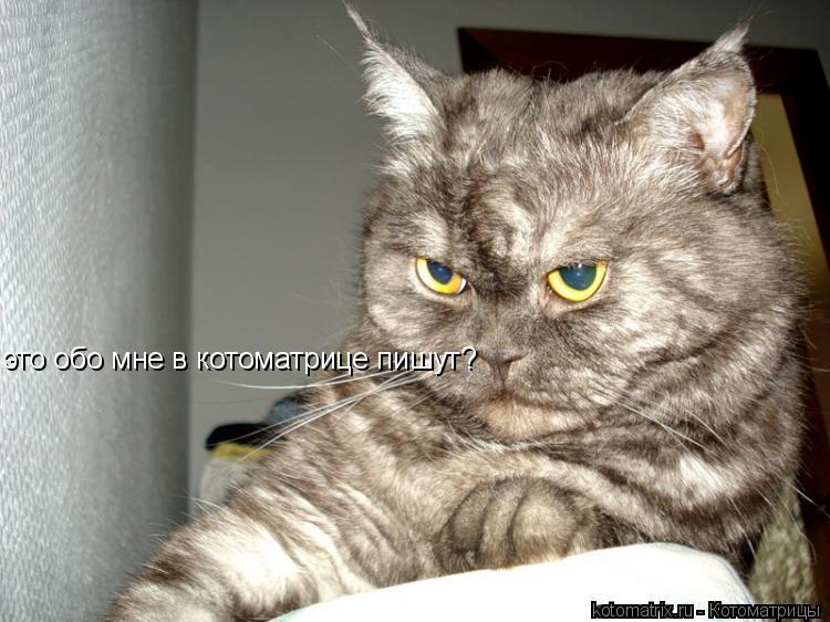 Котоматрица: это обо мне в котоматрице пишут?