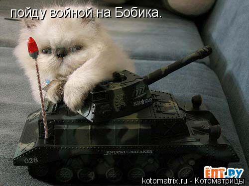 Котоматрица: пойду войной на Бобика.