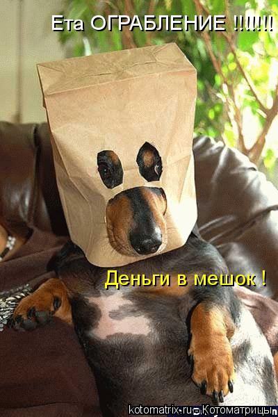 Котоматрица: Ета ОГРАБЛЕНИЕ !!!!!!! Деньги в мешок !