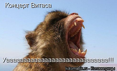 Котоматрица: Концерт Витаса Уааааааааааааааааааааааааааааа!!!