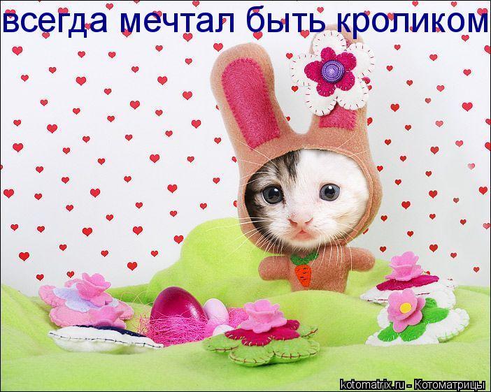 Котоматрица: всегда мечтал быть кроликом!