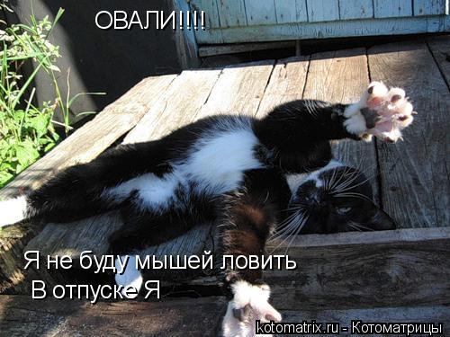 Котоматрица: ОВАЛИ!!!! Я не буду мышей ловить В отпуске Я