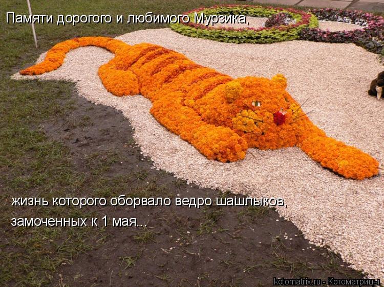 Котоматрица: Памяти дорогого и любимого Мурзика, жизнь которого оборвало ведро шашлыков, замоченных к 1 мая...