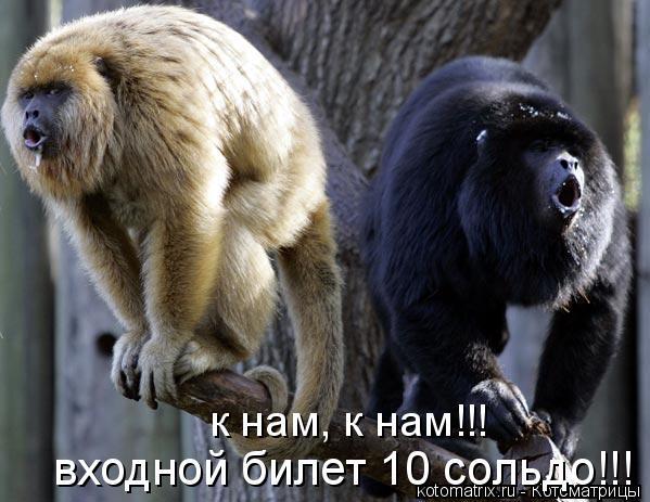 Котоматрица: к нам, к нам!!!  входной билет 10 сольдо!!!