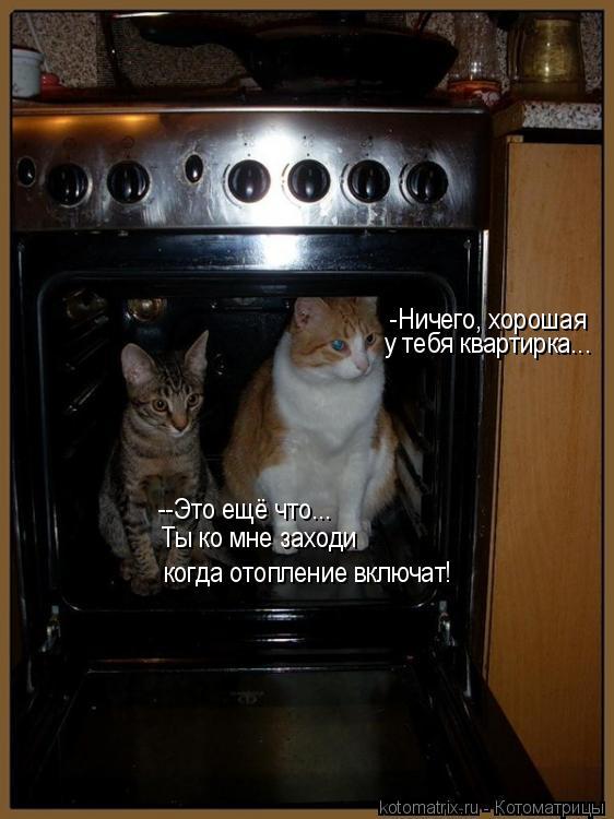 Котоматрица: -Ничего, хорошая  у тебя квартирка... --Это ещё что... Ты ко мне заходи когда отопление включат!