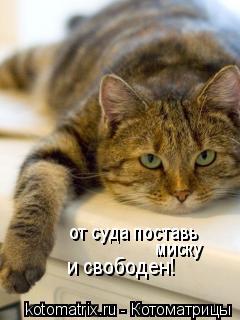 Котоматрица: от суда поставь  миску и свободен!